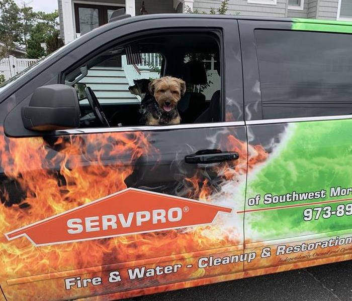 A SERVPRO truck parked in a driveway, with two dogs in it.